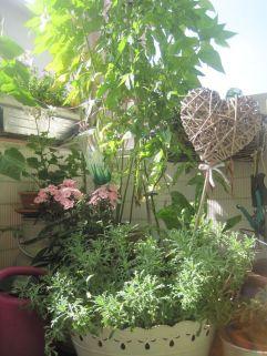 Blumen Pflanzenmarkt