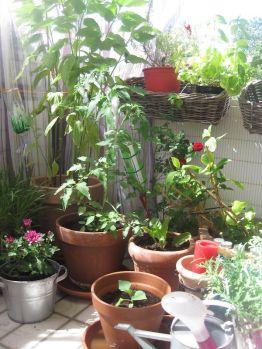 Blumen Pflanzenmart