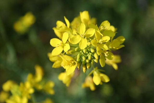 flower-783946_640.jpg