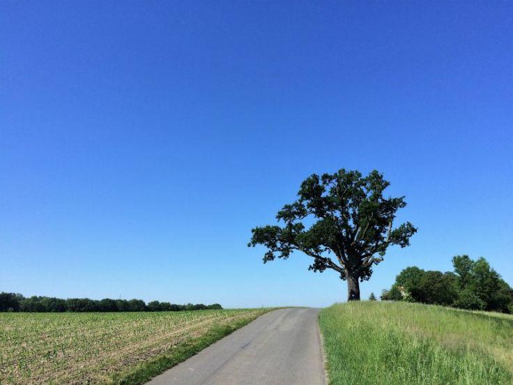 2017_07_mosauerin_lieblingsplatzerl_innviertel_20
