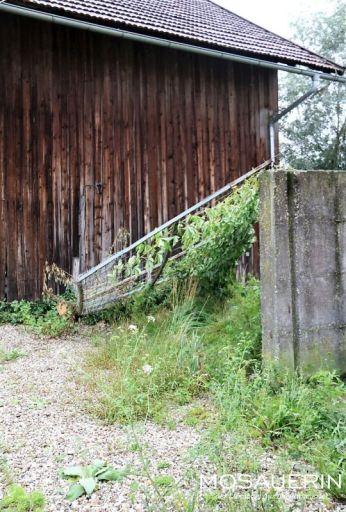2017-08-mosauerin-hofrundgang-august-25
