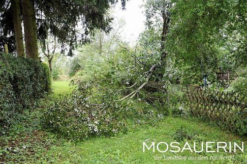 2017-08-mosauerin-hofrundgang-august-29