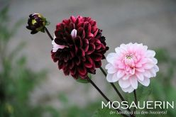 2017-08-mosauerin-hofrundgang-august-43