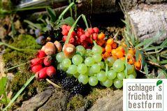schlagers früchte in bestform